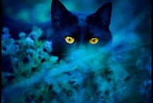 Black Cats...Faces / by Doris Amey-Ketcham