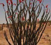 Arizona Plants