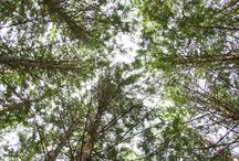 Finland / Finnish nature photography. Visit Finland.  Pic by @kupli.fi