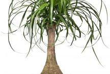 plantes fleurs