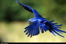 Aves / A beleza das aves