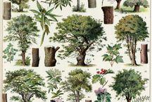 Láminas Antiguas: Flora y Fauna