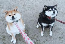 Doggos pupperinos............