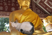 13. CATS AND BUDDHA'S ^..^ ♥♥♥