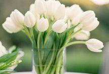 Spring and brightness