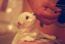 Animales que me encantan / animals