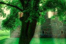 Zöld/Green