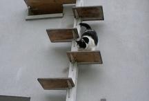 kattetrap
