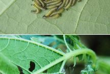 Gardening - Insects, Weeds and Disease Cures