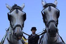 Kone-jazdecká škola / K dispozícii je jazdecký areál s viac než 40 koňmi a bezprostredne na nádvorí hotela nájdete golfovú akadémiu, ktorá ponúka kompletné výukové a tréningové plochy pre začiatočníkov aj pokročilých.