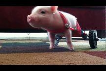 Video Chris P. Bacon