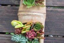 DIY - Plants
