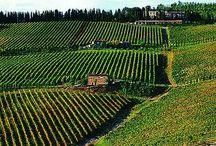 Chianti / Chianti Toscana