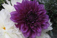 Flowers! / by Vickie Payne