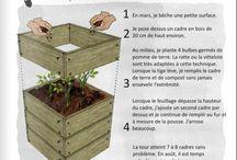 Jardinage pomme de terre