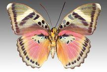pattern: birds & butterflies