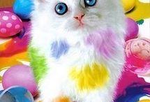 Katten en kittens.