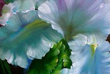 iris dipinti