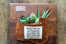 多肉植物LOVE