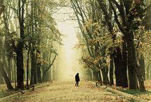 autumn / Cluj-Napoca, Romania