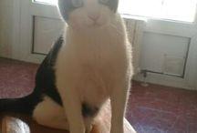 XICU / Mi lindo #gatito