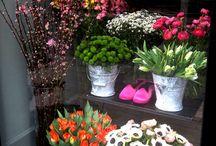 Vetrine in fiore / Un progetto, un'allestimento realizzato presso Pupi Solari Milano, l'idea trasformare le sue magnifiche vetrine in un'esposizione di fiori