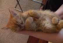 Krysia / Krysia the cat. Born in 5 may 2009