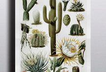 Botanique vintage