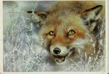 Animals - Vintage Postcards