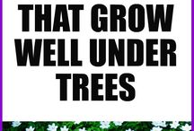 PLANTS THAT GROW WELL UNDER TREES