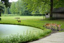 Utrecht :)