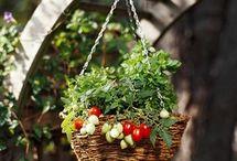 Home/Garden / by Patty Davis