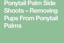 Plant info.