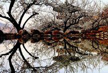 reflexii