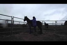 All Things Brumby / Brumby rehoming