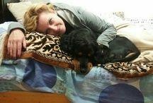 pt că iubim câinii