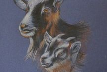 rysunki zwierząt / zwierzęta