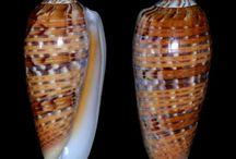 Shell/Deniz Kabukları