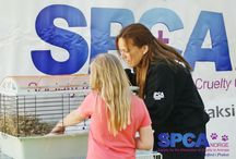 """SPCA Norway: """"Childrens day"""" 2013 / In Norway we celebrate a day called """"childrens day"""" in Telemark county, among others. We love to have a stand here and celebrate the children and educating people about animal welfare"""
