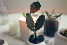 Cool plants  / by Brookelle Kapp