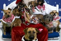 Holiday Animals / Animals celebrating their favorite holidays.