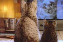 Video filmpjes met katten