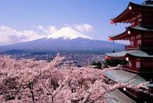 Japanese Cherry Blossoms / Cherry blossoms are beautiful everywhere, but only the most beautiful in Japan.