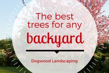 Backyard / Well-planned landscape design and features that make your property look beautiful.