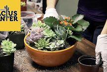 Cactus & succulent How-To Videos / 0