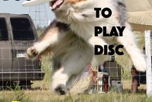 Canine Disc/Disc Dog / The DISC DOG EXPERT IS IN!  All about teaching your dog to play canine disc or disc dog. This is our specialty! We teach that you don't have to do high flying vaults to enjoy this sports and that bigger dogs can play too - WITHOUT jumping high. Australian Shepherds and Kuvasz but ANY BREED CAN LEARN HOW.