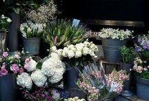 Florist ideas
