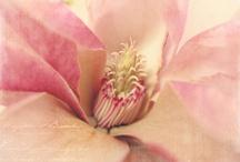 Flower power Photography / by Bri Hurst