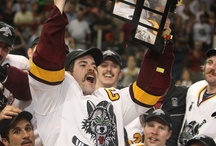 Chicago wolves .