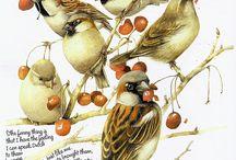 Odisseia ao Pássaro